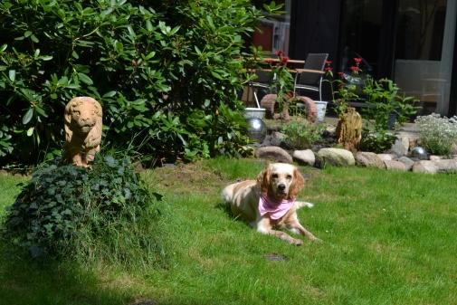 Das obligatore Hundebild darf natürlich nicht fehlen. ;-)