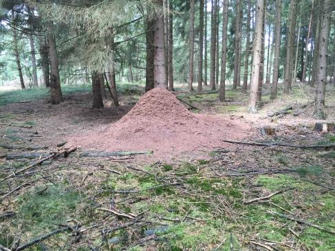 Beeindruckend. Man konnte kaum hingehen, weil der Boden voller Ameisen war.