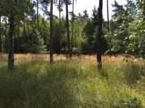Schön wie das Gras sich in Sonne und Wind wiegt.