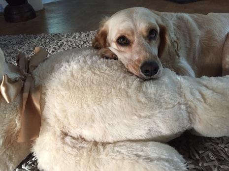 Fibi mit ihrem Teddy. Kau-Teddy und Kuschelkissen :-)