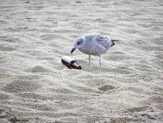 seagull-1943079_1280