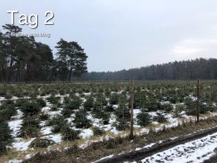 Hier kommen die Weihnachtsbäume her