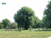 Im Park links der Außenalster.