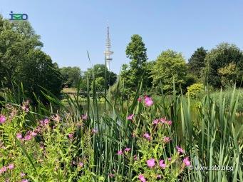 Hamburg-Planten-un-Bloomen-Fernsehtum_c